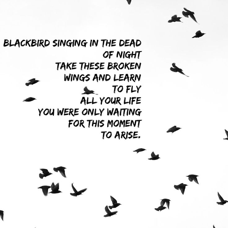 Blackbird singing in the dead of night Take these broken