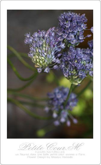 20140122 入荷の花アリアム