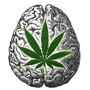 STUDY FINDS CANNABIS STIMULATES BRAIN GROWTH. A new study has found that cannabidiol (CBD)--one of the primary compounds of cannabis--can actually help your brain grow.