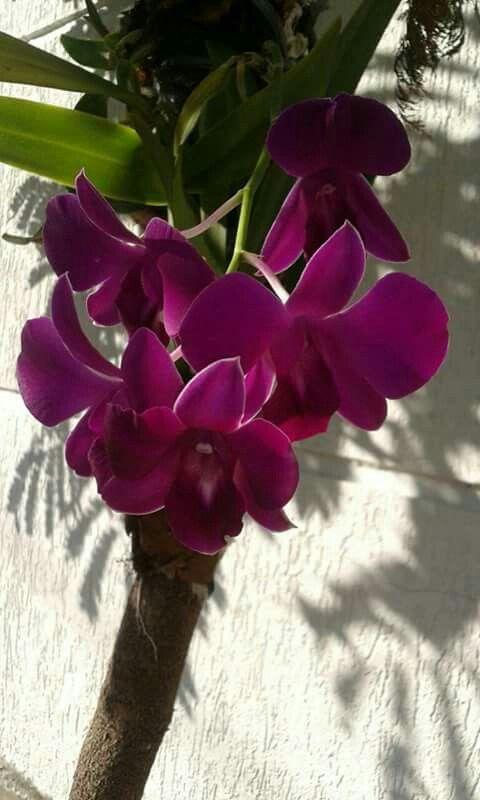 513 best ORCHIDS <3 images on Pinterest | Beautiful flowers, Plants ...