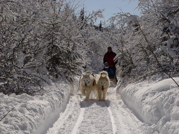 Traîneau à chiens / Québec