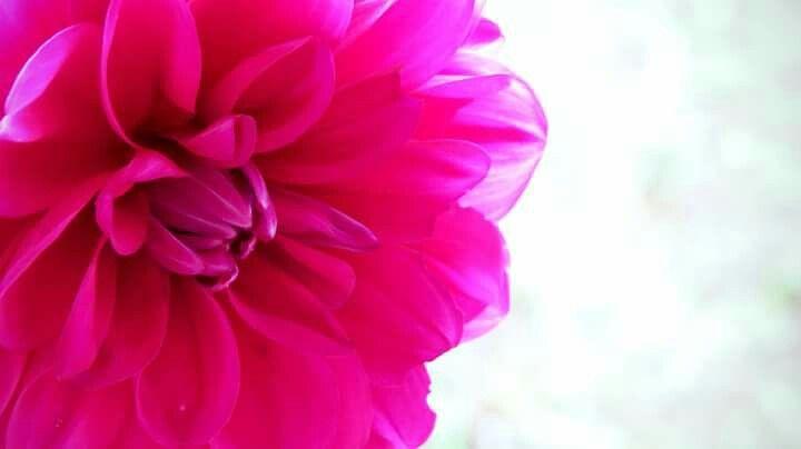 Flor cálida Foto: MICB