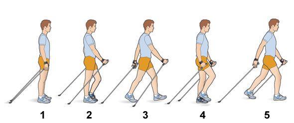 Nordic Walking, Technik, Infografik