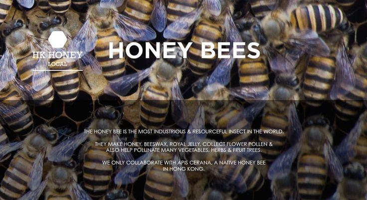 HK Honey - Honey Bees