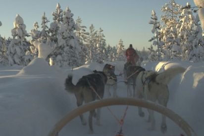 3 hour Arctic Light Safari by dog sledge 180,- € per person