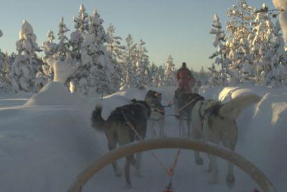 3 hour Arctic Light Safari by dog sledge 180,- € per person