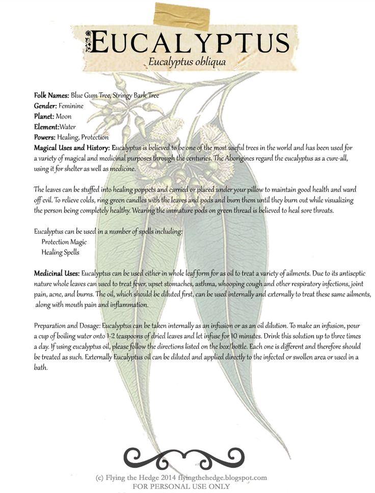 Magical and medicinal uses of Eucalyptus