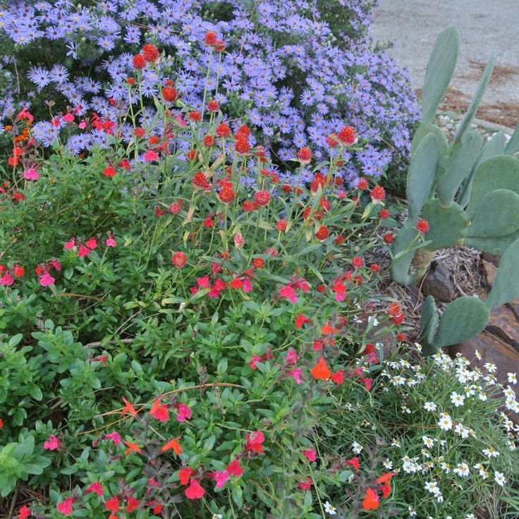 1000+ images about North Texas Gardening on Pinterest ...