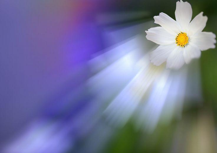 Dreams of the Flower! by Aziz Nasuti on 500px