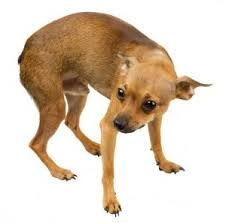 A dog with a tail tucked, curled or hanging low is a classic sign of a dog who is feeling submissive or fearful