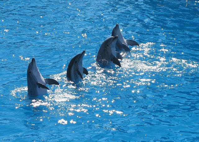 4- Dolphins believe in develping familes and normally one group of dolphins is also lead by a female one. Several members of a group can even help the members of the other group in hunting and travelling.