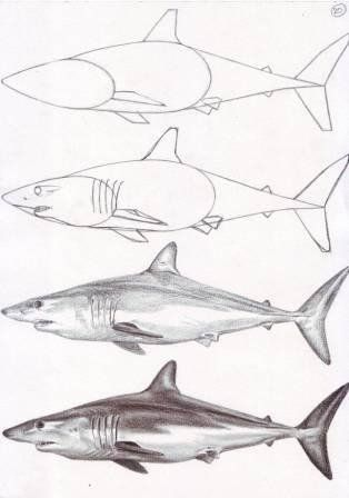 shark step by step drawing  https://www.facebook.com/veriapriyatno