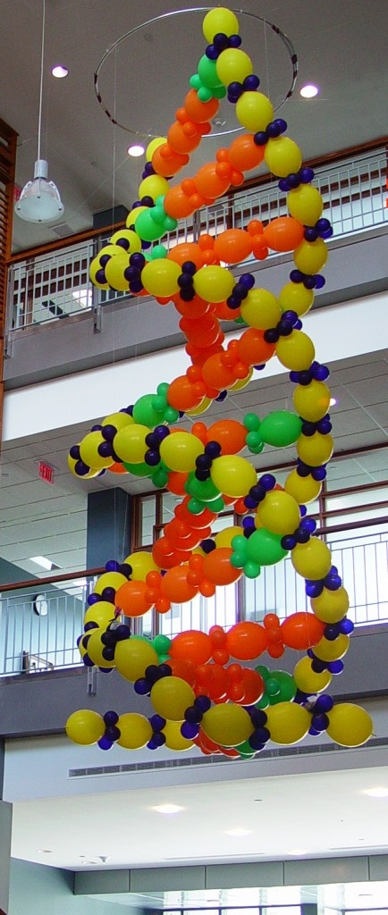 Balloon sculpture of DNA  on a much smaller scale ????
