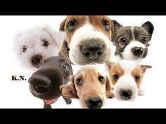 Música para dormir perros - Calmar ansiedad - YouTube