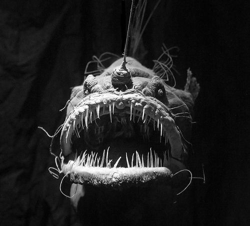 Angler Fish   ikes! One of the creepiest things on earth... but also one of the coolest!!!