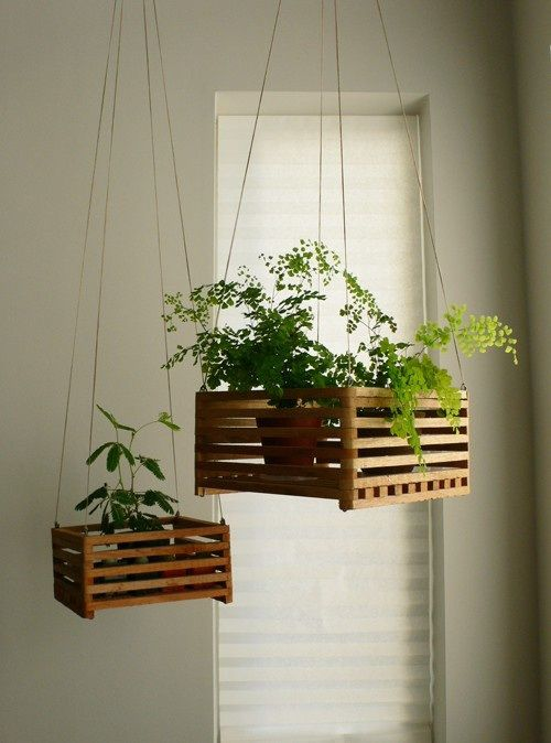 hanging plants that aren't totally daggy