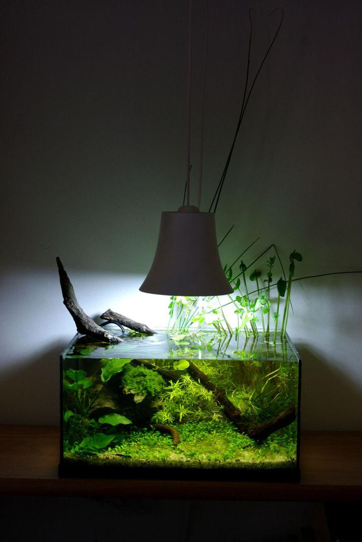 25 best ideas about nano aquarium on pinterest for Filtre petit aquarium