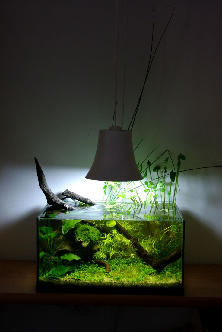 25 best ideas about nano aquarium on pinterest. Black Bedroom Furniture Sets. Home Design Ideas