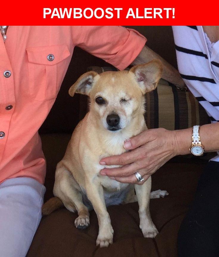 Please spread the word! Ayashe was last seen in Las Vegas, NV 89149.    Nearest Address: Near Grand Montecito Pkwy & Bruce Woodbury Beltway