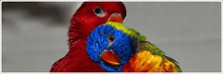 Vogelartikel für Papagei, Kanarienvogel und Sittich