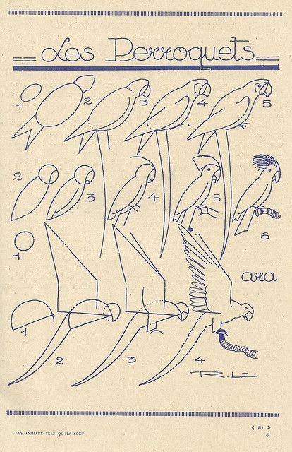 """Serie """"Cómo dibujar..."""" / how to draw birds"""