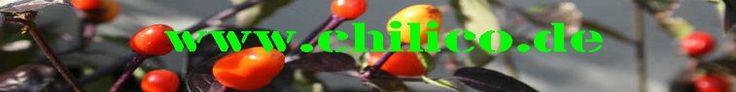 Kann man #Chili-Pflanzen durch #Stecklinge vermehren? 1: Ja || der Steckling sollte gerade geschnitten sein, am besten unter einem Auge (die Verdickung, wo ein neuer Trieb entstehen würde) || die Blattmasse sollte im Verhältnis zur Stecklingsgröße nicht zu groß sein || man kann die Schnittfläche noch etwas anschrägen, damit mehr Wundgewebe entsteht (Wundschnitt) || feuchtes, gut durchlüftetes Kultursubstrat verwenden; ich mische in die Pflanzerde relativ viel Perlite und Pflanzton/Blähton…