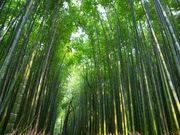 竹林の道の観光情報 交通アクセス:(1)嵯峨野観光線 「トロッコ嵐山駅](徒歩3分)。竹林の道周辺情報も充実しています。京都の観光情報ならじゃらんnet 平安時代から貴族に愛され、別荘や庵が多く築かれた嵯峨野。嵐山の北東に広がり、今も変わら