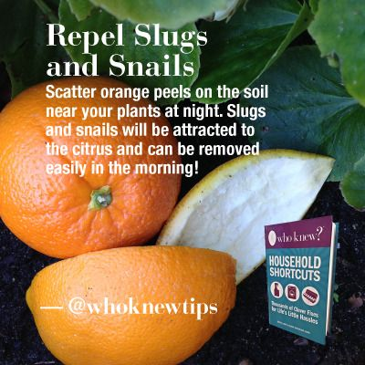 Get Rid Of Slugs And Snails Using Orange Peels Gardening