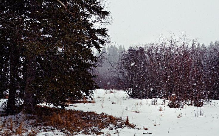 Enjoy the snow! Winter activity.. https://urbanehillbillycanada.blogspot.ca/2018/02/bush-life-firewood-cutting.html