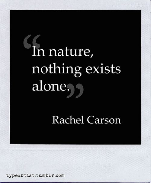 In nature, nothing exists alone. ~ Rachel Carson (Author of Silent Spring and The Sense of Wonder)