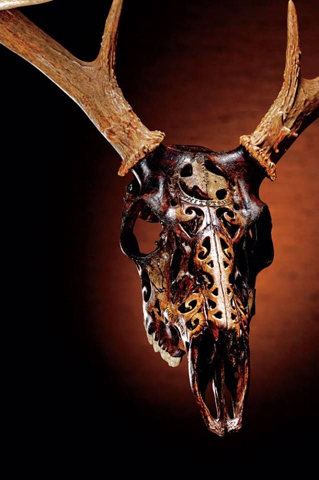 Best images about shed hunting and art on