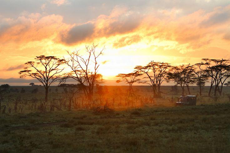 Πρωινό σαφάρι. Όμορφη ανατολή στο Εθνικό Πάρκο Serengeti, Τανζανία