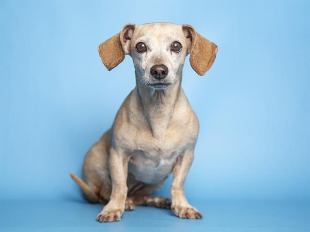 Adoptable Pets From Arizona Humane Society And Maricopa County