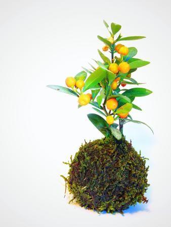 flowers xylem