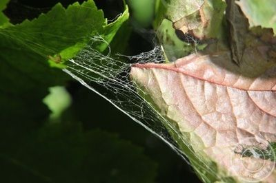 The Silky Trap