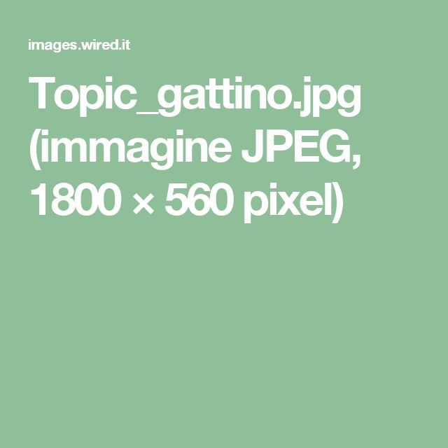 Topic_gattino.jpg (immagine JPEG, 1800×560 pixel)