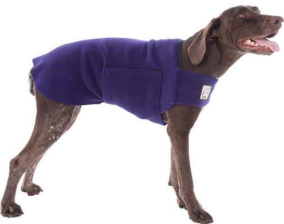 GERMAN SHORTHAIRED POINTER Tummy Warmer, Dog Clothing ...