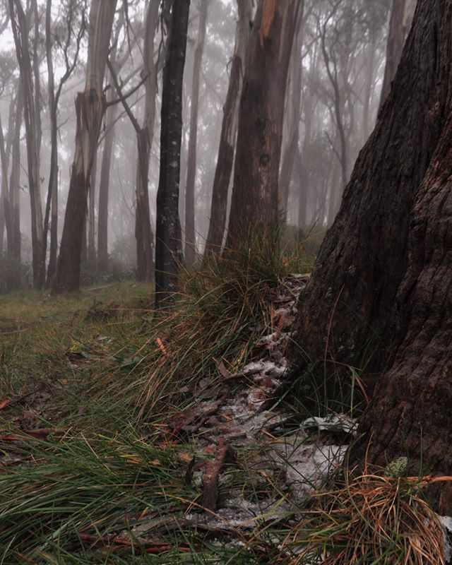 0 degrees,  sleet,  wind  and fog - just your usual day at Mt Donna Buang . #finallywinter #chilly #iceicebaby #loveit #parksvic #mtdonnabuang #melbs