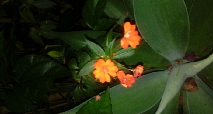 Flor de Plantas Herbaceas