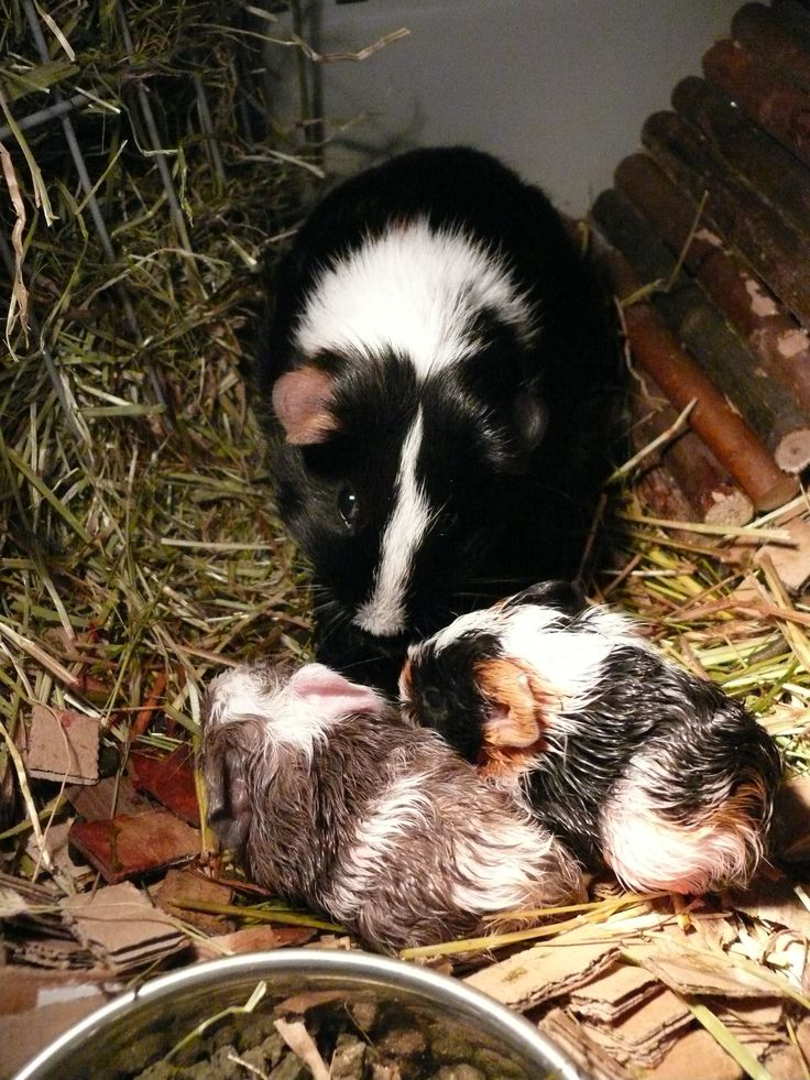 Mama Bregtje giving birth!