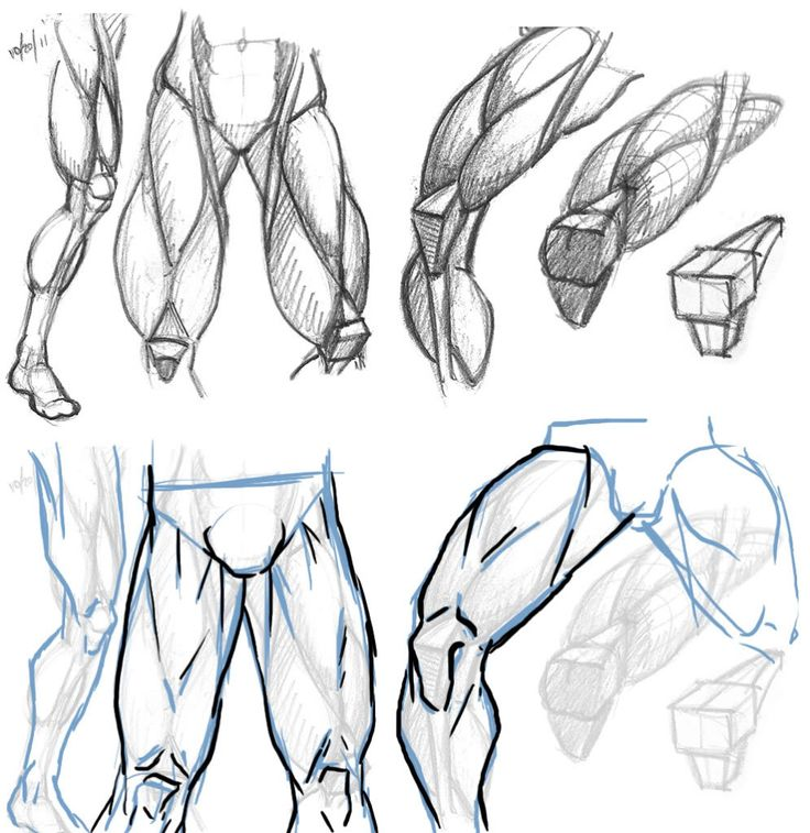 This is a graphic of Refreshing Muscle Leg Drawing