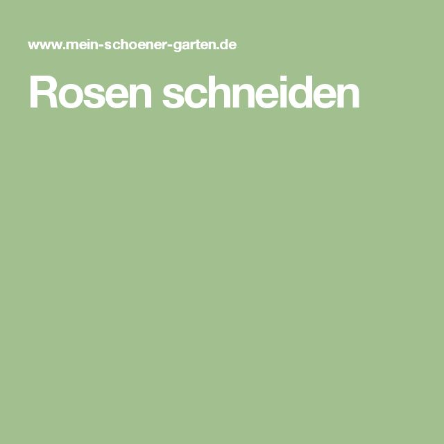 1000 ideas about rosen schneiden on pinterest rosen. Black Bedroom Furniture Sets. Home Design Ideas