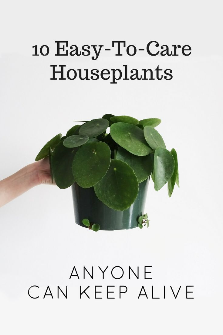 10 Easy To Care Houseplants Anyone Can Keep Alive Low Maintenance Plants Low Maintenance Garden Low Maintenance Indoor Plants