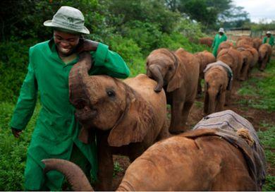 love loveBaby Elephant, Dreams Job, National Geographic, Wildlife, Kenya, Places, Africa, Elephant Nurseries, Animal