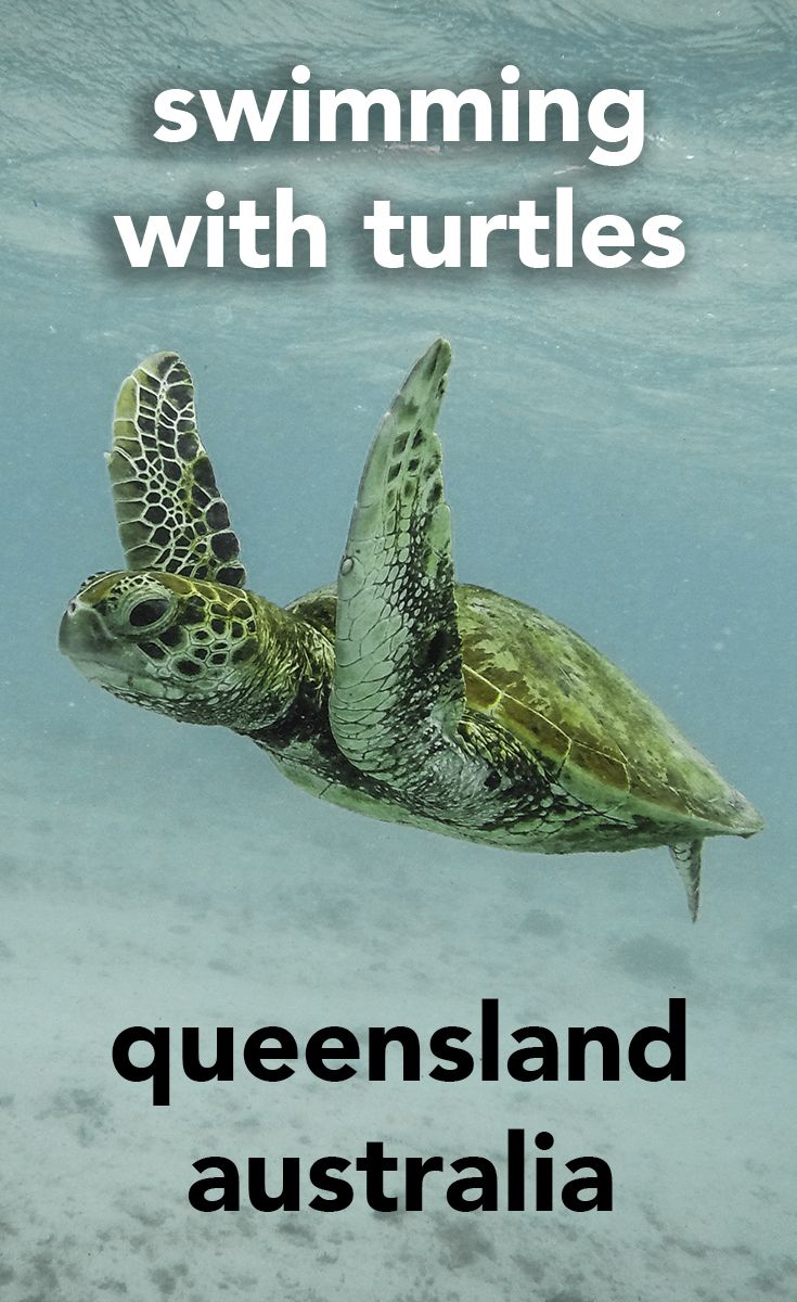 The small Queensland island off the coast of Australia where you can go swimming with dozens of turtles in the wild.