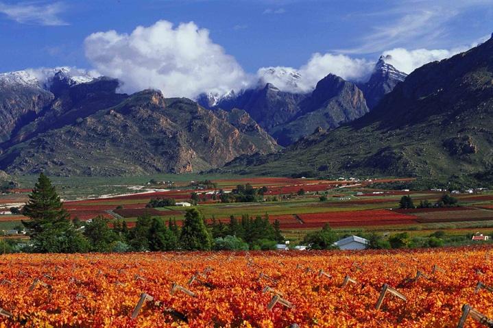 Route 62 / Western Cape: Das Breede River Valley und die Kleine Karoo bestimmen die Landschaft entlang der Route. Sie führt von Kapstadt über Paarl, Wellington, Tulbagh, Worcester, Roberston, Montagu, Calitzdorp bis nach Oudtshorn.
