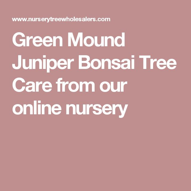 Green Mound Juniper Bonsai Tree Care from our online nursery