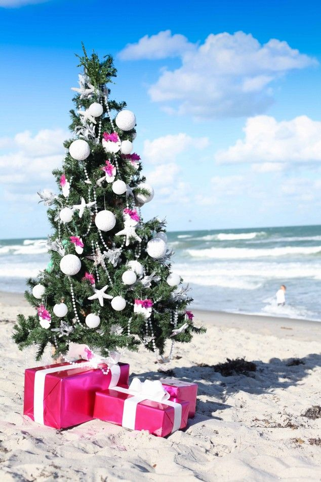 Image result for christmas tree at the beach