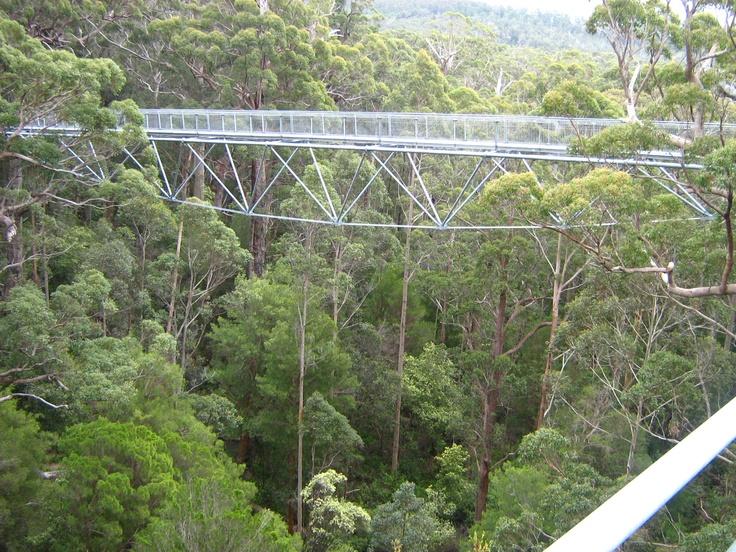 #Valley of the Giants Tree Top Walk, Walpole, Western Australia http://wp.me/p27yGn-127