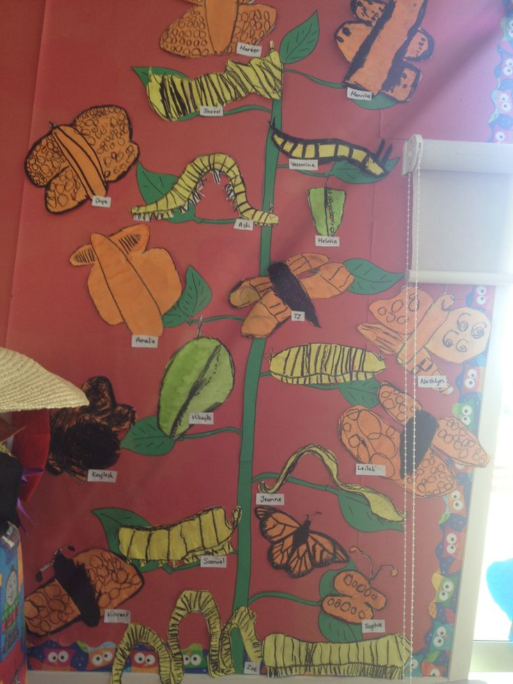Butterfly life cycle art